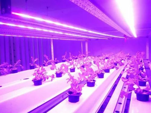 Aluminium Pink Plant Grow Light