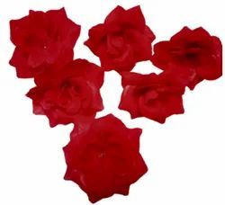 TFH Red Velvet Rose Flower, For Decoration