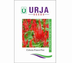 Celosia  Forest Fire Seeds