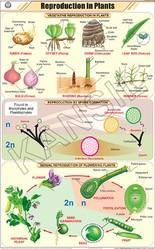 Reproduction In Plants For Botany Chart