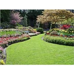 Back Yard Commercial Landscaping Services