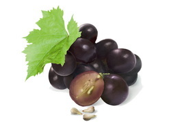 Aromablendz Grape Seed Oil