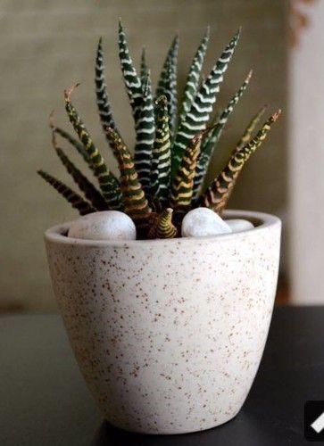 Ceramic Indoor Planter at Rs 40 /piece   Aligarh   ID: 14863219530