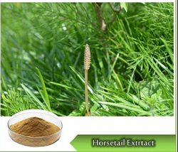 Horsetail Extract, Packaging Type: Hdpe Drum, Pack Size: 1 To 25 Kg