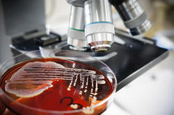 Microbiology Testing Services