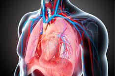 Cardio Thoracic And Vascular Surgery services