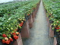 PVC 110 Close Type Mapal Strawberries Soilless Trough
