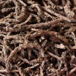Kutki - Picrorhiza Kurroa - Hellebore