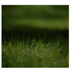 Environmental Protection Service