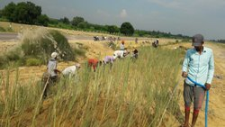 Grass Plantation for Slope Protection
