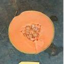 Hybrid Fresh Melons Seeds