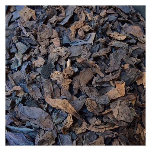 Blue Lotus Dried Flower At Rs 150 Kilogram Shahdara Delhi Id