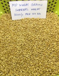 Sharbati Whole Wheat Grains Sortex Cleaned From Mp, 50 kg