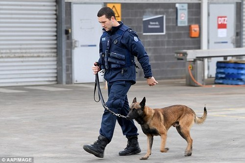 Image result for Dog Handler Guard Security