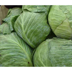 Fresh Cabbage, Packaging: Pallet Box