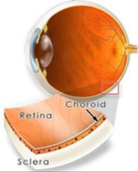Vitreo Retina Treatment Services