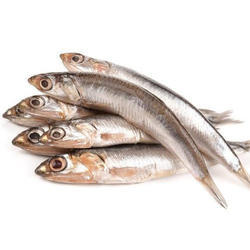 Anchovy Fish, Usage: Restaurant, Household, Mess