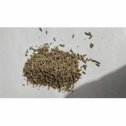 India Gate Cumin Seeds