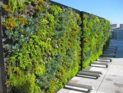 Vertical Landscape Gardening