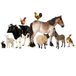Pharma Veterinary Franchise