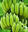 A Grade Fresh Green Banana