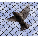 Star Anti Bird Nets