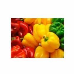 Coloured Capsicum