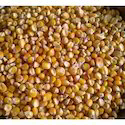 Indian Yellow Organic Corn, No Preservatives