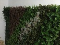 Artificial Vertical Green Wall