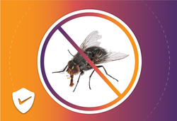 Commercial Flies Control Services, in Delhi Ncr