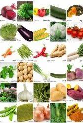 Hybrid Vegetable Seeds, for Agriculture