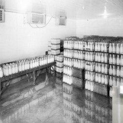 Dairy Products Cold Rooms