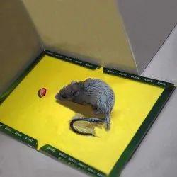 Rat Glue Trap