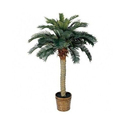 Outdoor Palm Plant