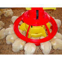 Automatic Poultry Feeder
