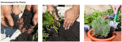 Bazodo Organic Vermicompost Fertilizer Manure for Plants