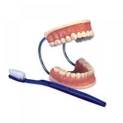 Dental Care Model ZX-1411