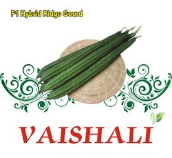 SBPL Vaishali F-1 hybrid Ridge Gourd Seed, for Agriculture Purpose