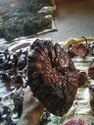 Dried Ganoderma Mushroom