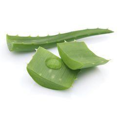 Aloe Vera Leaves(Dry ) - Jamaica