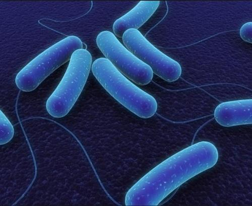 mitushi bacillus subtilis pack size 25 kg rs 300 kilogram id
