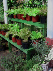 Medicinal And Aromatic Garden Services
