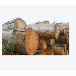Brown Solid Eucalyptus Wood Log