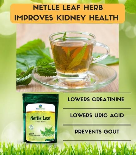 Image result for nettle leaf for kidney pic