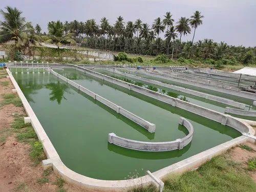 Spirulina ponds-Spirulina powder