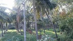 Land For Sale With Co-Conut Trees