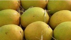 Alphonso Mangoes in Bengaluru - Latest Price & Mandi Rates from