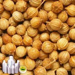 Coriander Oil Certified Organic