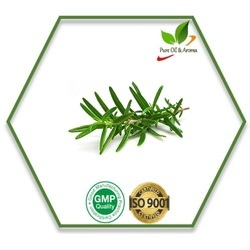 Rosemary Oil at Best Price in India