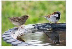 Sparrow Habitation Project
